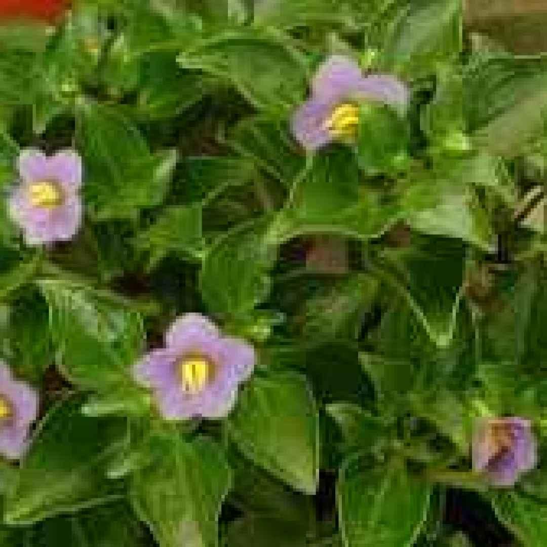Cultura piante in bagno potete metterle sul lavandino for Arredamento piante