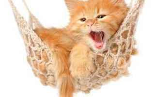 Animali: gatto  comportamento  linguaggio