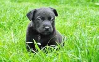 Animali: dominanza tra cani  gerarchie tra cani  cani  dominanza  gerarchie
