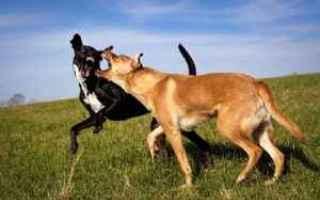 Animali: gerarchie tra cani  il cane dominante