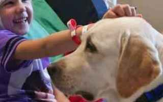 Animali: cane  cani  pet therapy
