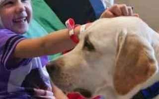 Animali: cane  cani  pet therapy
