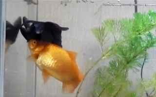 Animali: pesci  amicizia  aiuto