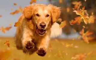 Animali: cane  gastrite  veterinario