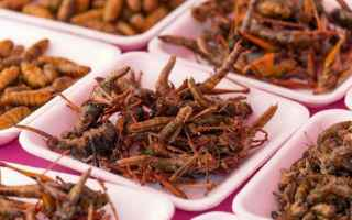 Alimentazione: mangiare insetti