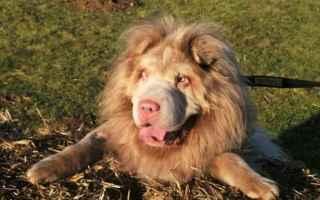 Animali: cane  leone  tydus