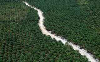Dal 1990 l'Indonesia ha perso 31 milioni di ettari di foresta pluviale, unarea paragonabile alla G