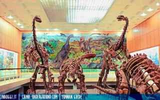 dinosauri in cina guida yunnan chuxiong