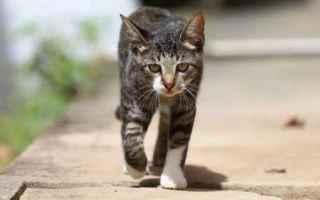 Animali: gatto