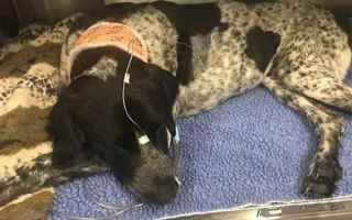 cane  cane malato dozer