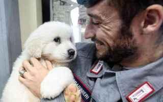 Animali: rigopiano  cuccioli  cane  terremoto