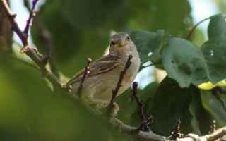 Animali: uccelli selvatici  inverno  giardino