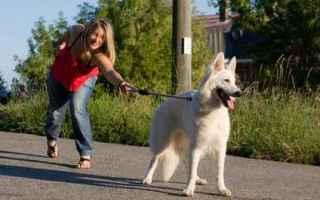Animali: cane  addestramento