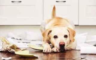 Assicurazioni: assicurazione  animali