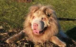 Animali: cane  leone