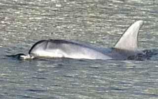 delfino  arno