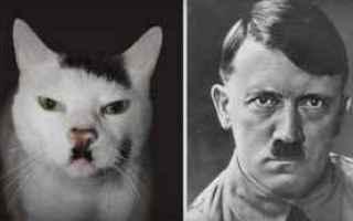 Animali: gatti  animali  vip
