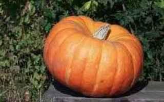 Salute: zucca  arance  tumore  polmoni