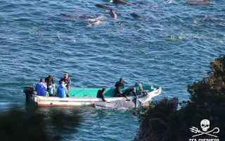Genova: portofino  sea sheperd  animal equality