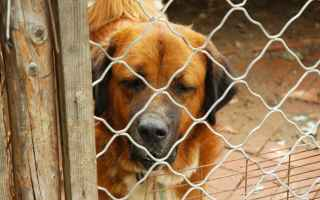 Animali: cani  adozioni  canile  gabbia