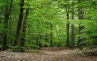 interpretazione sogni sognare la foresta