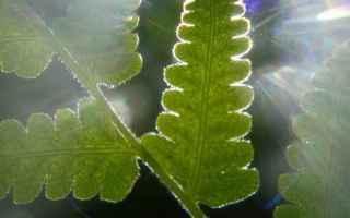 Il ciclo di Calvin-Benson della fotosintesi clorofilliana è un processo metabolico ciclico che avvi