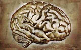 zen  meditazione  neuroscienza