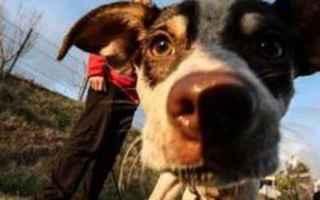 cane  signora  passeggio  disavventura