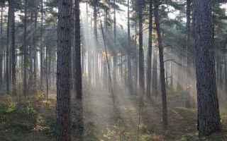 Ambiente: Cambiamento climatico e aumento delle precipitazioni