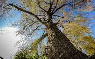 vegetariani  alberi  biologia