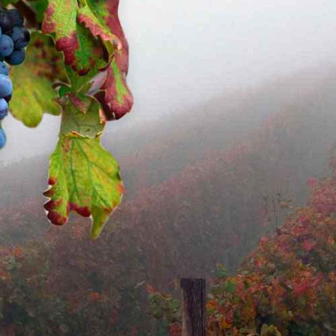 nebbiolo  vino  vino rosso  vino italiano