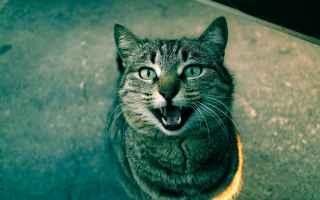 Animali: festa del gatto