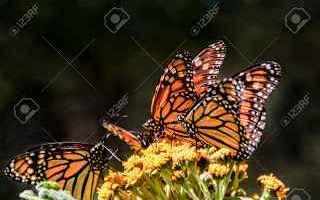 Animali: inverno  insetti  biologia
