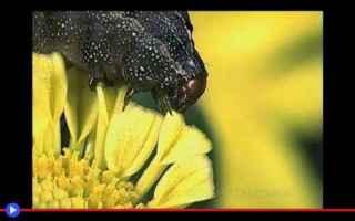 Ambiente: insetti  animali  piante  africa