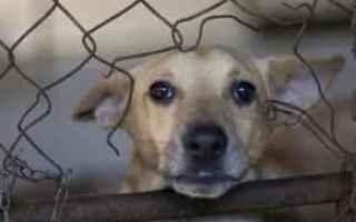 Animali: politica  randagismo  cani  animali