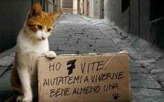 Animali: gatti  animali