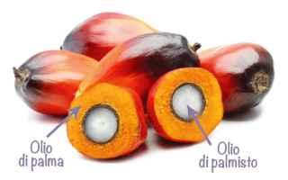 Lolio di palma è davvero così dannoso per la salute come si dice? Si trova praticamente dappertutt