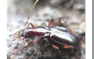 Ambiente: insetti  estinzione  ricerca