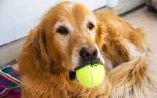 tennis  grand slam  cani  raccattapalle