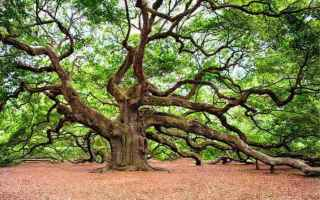Psiche: interpretazione sogni sognare alberi