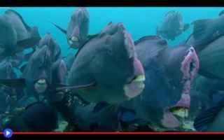 Animali: animali  pesci  natura  ambiente  oceano
