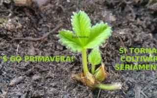 Ambiente: orto  primavera  coltivare  bosco