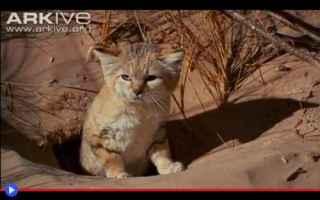 Animali: gatti  felini  natura  ambiente  animali