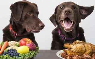 cane  alimenti cani  dieta barf