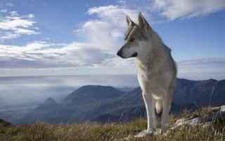 Animali: cane  alimenti cani  allergie