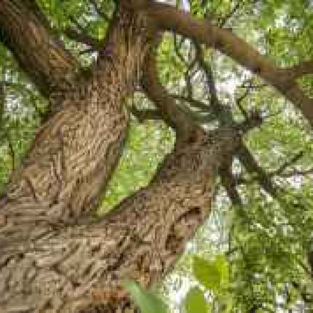 fotografia  alberi  sradicare  natura