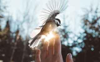 fotografia  natura  birdwatching