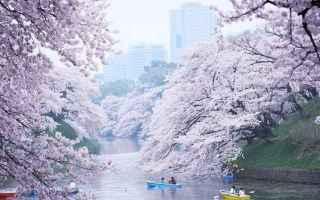 Viaggi: giappone  hanami