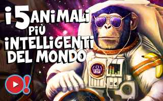 Animali: top 5  animali  mondo  curiosità