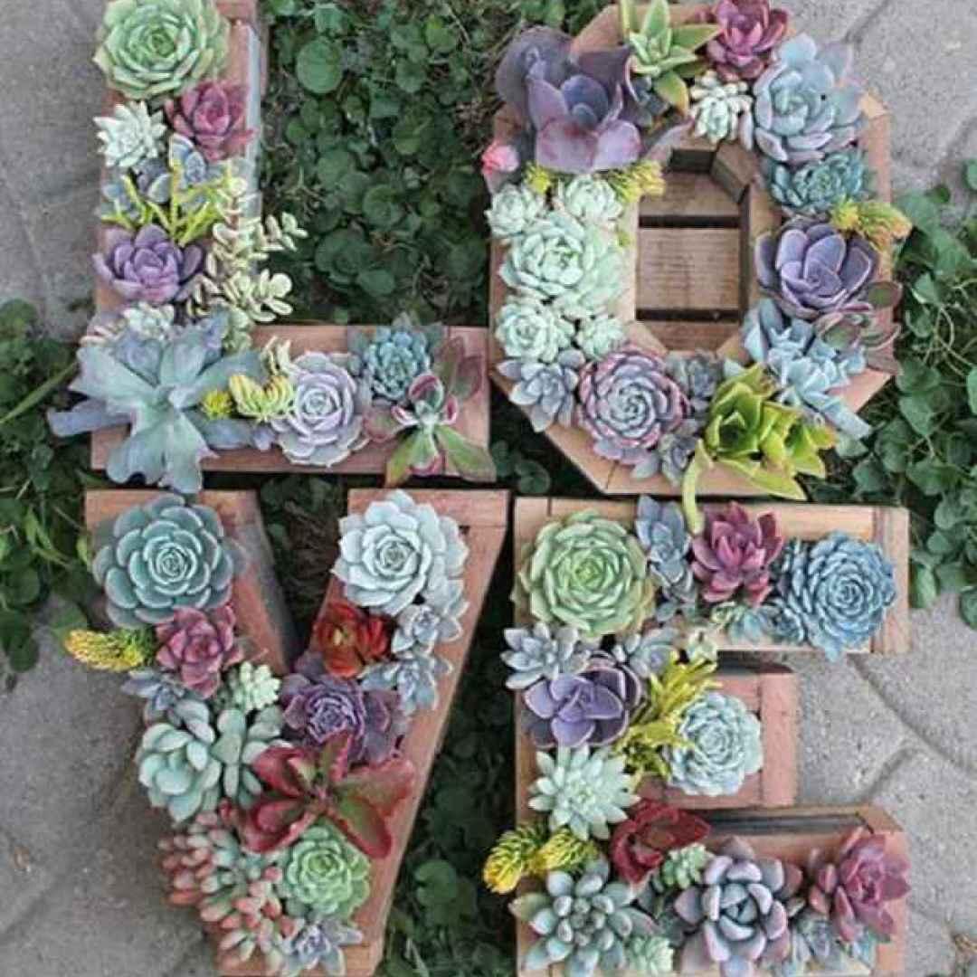 matrimonio  piante grasse  fiori